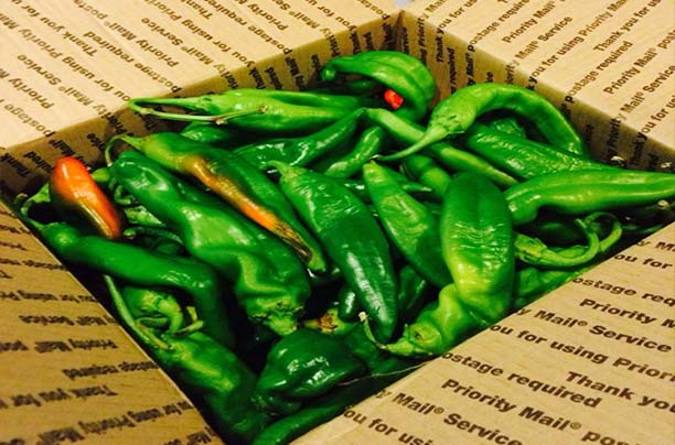 25lbs Fresh Harvest Hatch New Mexico Green Chile