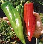 Nu Mex Heritage Big Jim Chile Seeds X-Hot-7000 Scovy, incl ship